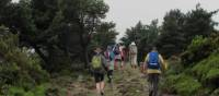 Hiking amongst heather on the Camino, Spain   Andreas Holland
