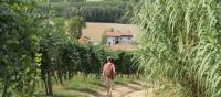 Walking towards a village in Piedmont | Jaclyn Lofts