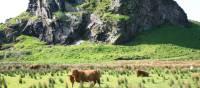 Dungalss Hill and Highland cattle | John Millen