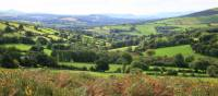 Bucolic countryside around the Wicklow Way | John Millen