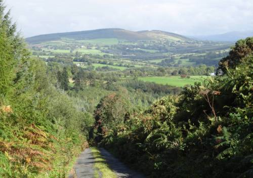 The Wicklow Way near Boley&#160;-&#160;<i>Photo:&#160;John Millen</i>