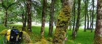 Taking a forest break along the Great Glen Cycleway, Scotland | Chris Booth