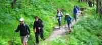 Trail near to Inversnaid, Scotland