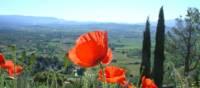 Find poppies on a summer walk around Gordes