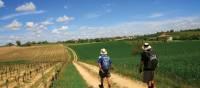 Vineyard walking